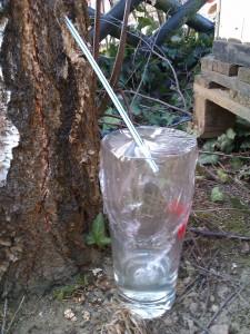 eau de bouleau